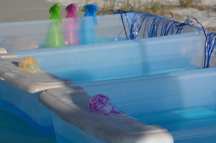 jellyfish races setup (2)