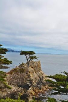 lone cypress 17 mile drive