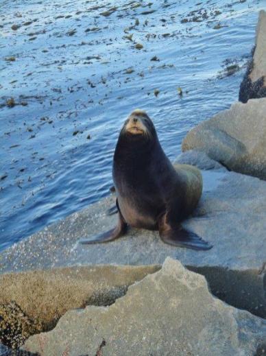 Coast Guard Pier - sea lion