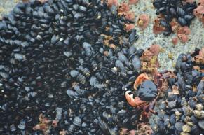 Mussels and Crab - Coast Guard Pier Monterey Bay