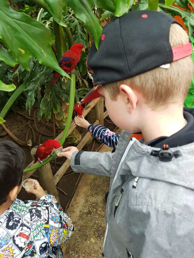 Happy Days: 5 Great animal attractions to visit in Southern England. Image of children feeding nectar to parrots at Woburn Safari Park