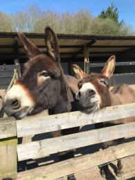 Happy Days: 5 Great animal attractions to visit in Southern England. Images of various farm animals, donkeys, ponies and a cow