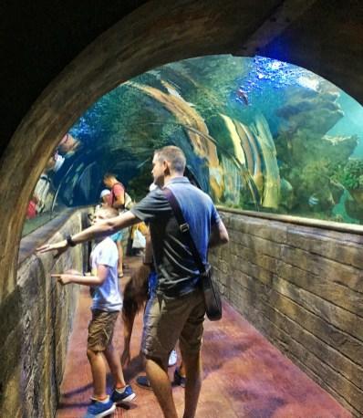 5 Fun kid-friendly things to do in Malta. Image of walkthrough tunnel at Malta aquarium