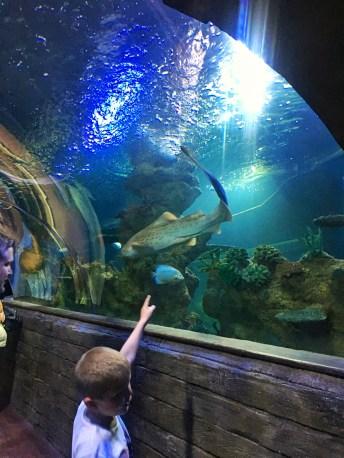5 Fun kid-friendly things to do in Malta. Image of walk-through tunnel at Malta Aquarium