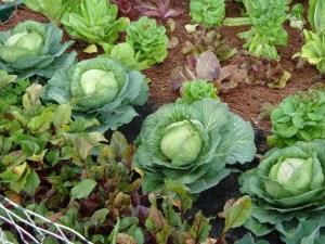vegetable-garden-wallpaper-3