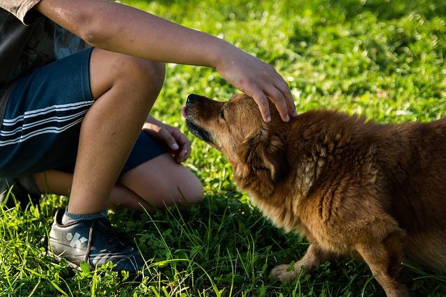 dog sit or dog walk to make money