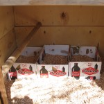 beer box nesting boxes