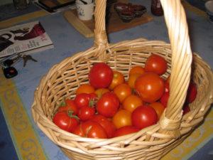 2009 Tomato Bounty