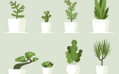 The best indoor plants and how to care for them