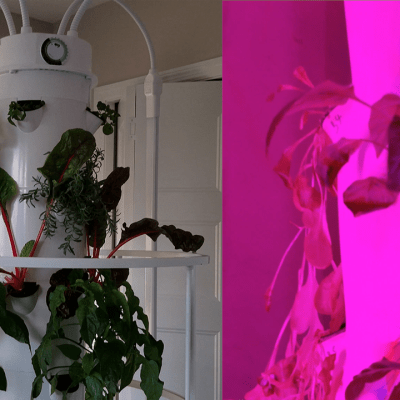 Indoor Gardening: Aeroponics Update & Compare