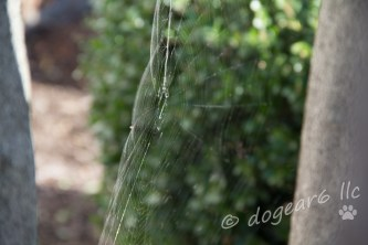 Neoscono spider web