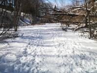 Trail in Cedarvale Ravine.