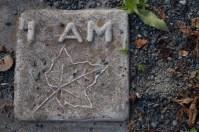 I am maple leaf tile.