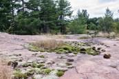Mosses growing on granite.