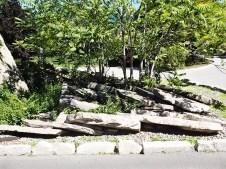 Japanese garden at JCCC.