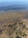 Sunnyside water's edge.