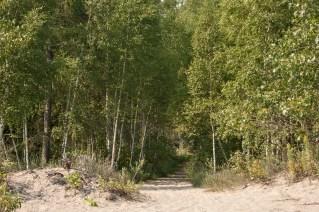 Wooded path to Ward's island beach.