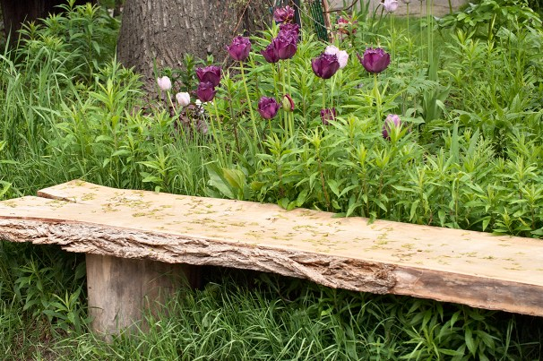 Tulips bloom beside the bench