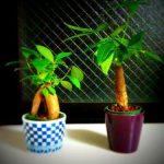 運気を上げる観葉植物の栽培方法はコレ!
