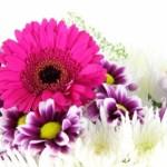 花言葉で恋する気持ちを伝え贈る!花14選