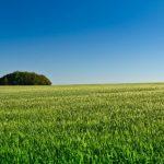 熔成リン肥の特徴と使い方【肥料の上手な施し方】