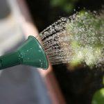 鉢花への「水やり」は環境や季節を考慮したタイミングが大事!