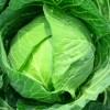キャベツの健康効果と栄養を損なわない食べ方