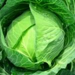 キャベツの栄養効果と食べ方【ミネラル・ビタミン・食物繊維の成分値と働き】