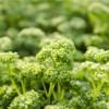 栄養価の高いパセリを美味しく食べる方法【野菜の効能と食べ方】