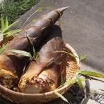 たけのこは食物繊維&ミネラルが豊富な春を代表する野菜