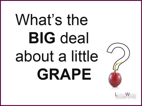 What's the Big Deal About A Little Grape