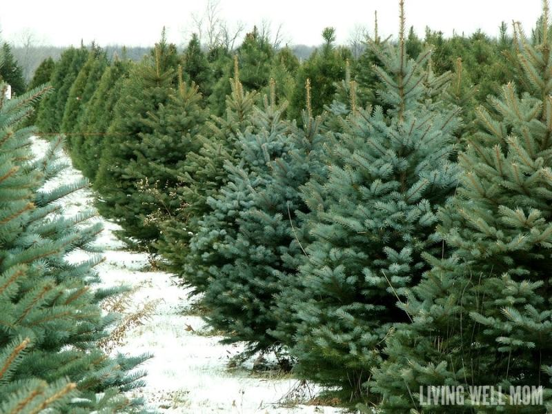 3 Tips for Keeping Your Christmas Tree Alive for Longer - love the scent of your live tree but tired of dry needles everywhere? Here's three simple tips that will help your tree stay fresh and alive for longer.