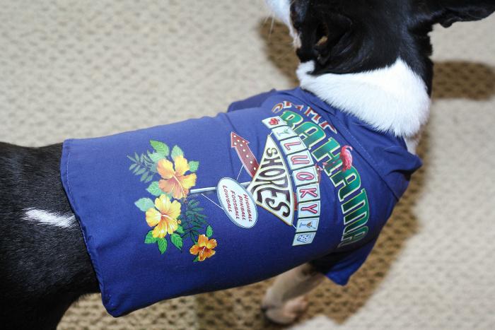 Petsmart tommy bahama dog shirt
