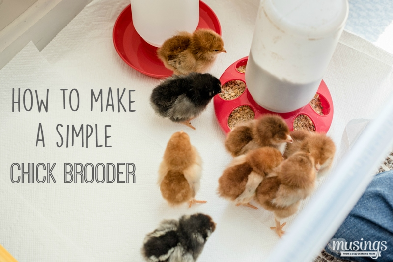 How to make a simple chick brooder | raising chickens