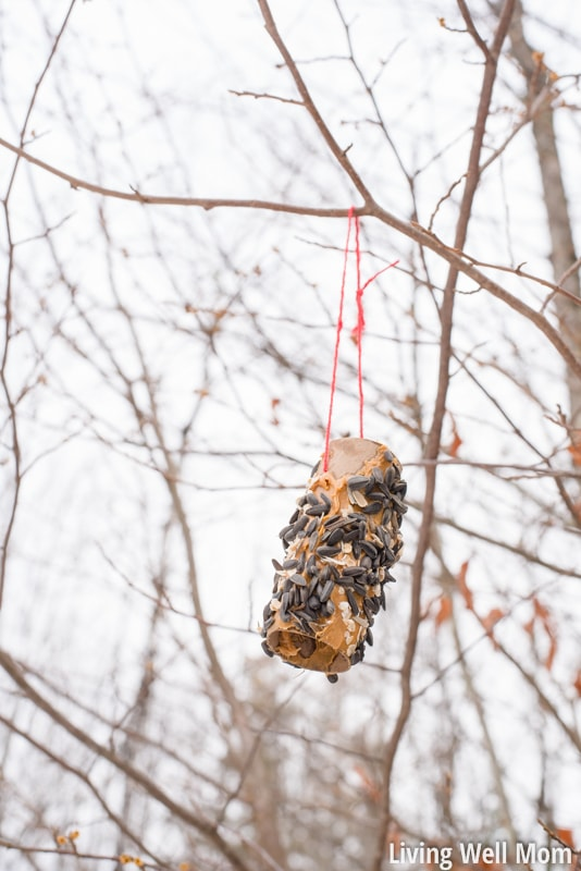 Looking for an easy activity to do with the kids? This simple homemade bird feeder uses common household items you probably already have and is so easy to make, it's the perfect project for young children! Plus it's a great way to teach kids about nature; they'll love seeing wild birds eat from their very own feeder!