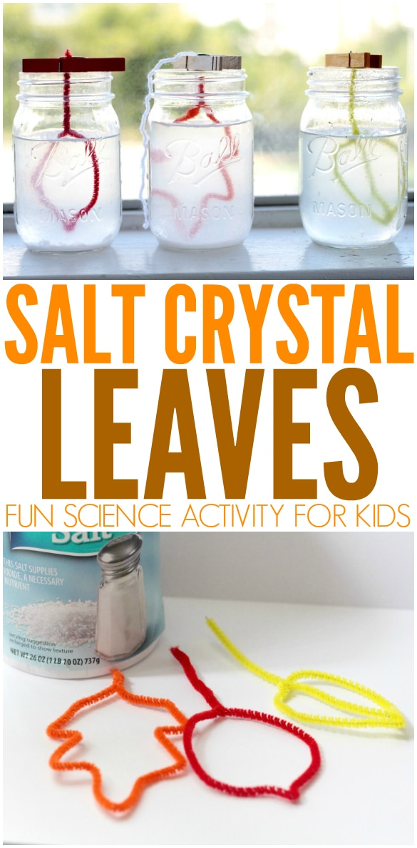 Salt Crystal Leaves - Love fall leaves? This seasonal twist on salt crystal science transforms autumn leaves into beautiful crystals. This is a simple yet fun STEM activity for kids!