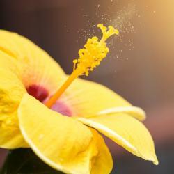 pollen flower allergies