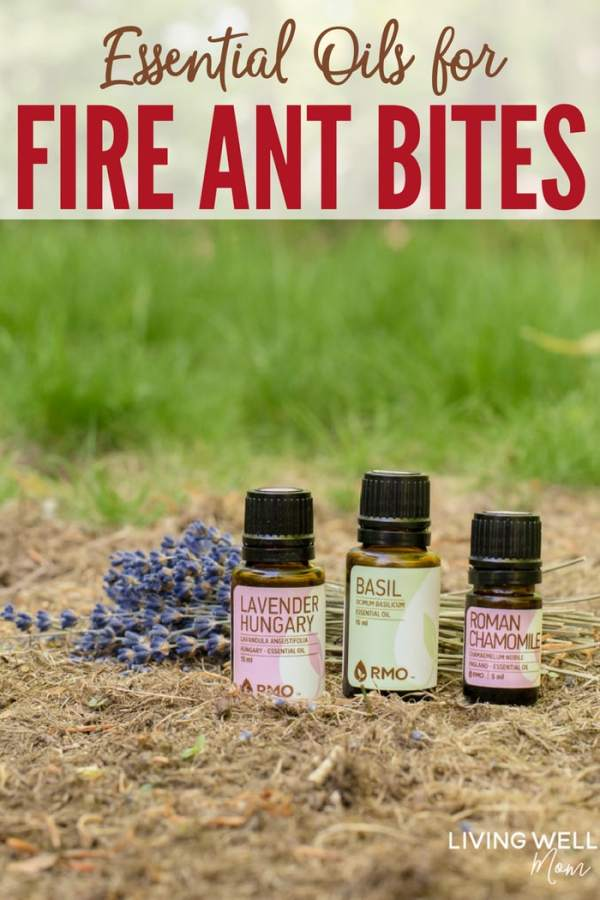 essential oils for fire ant bites
