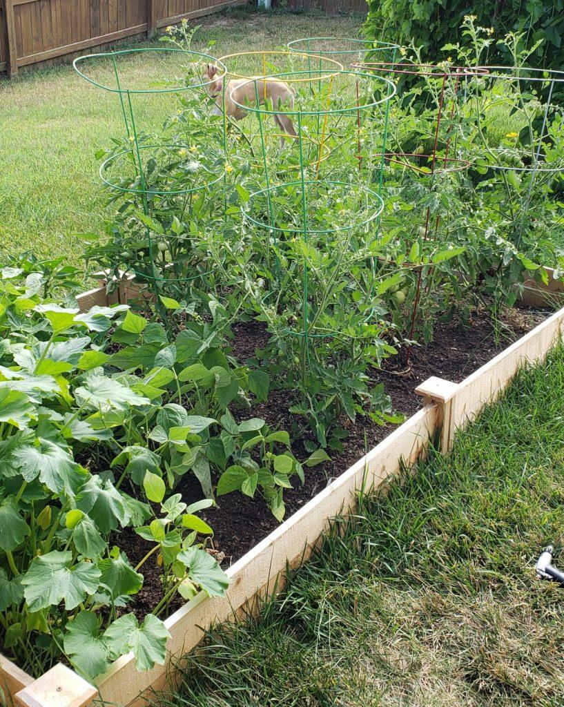 gardening while gray