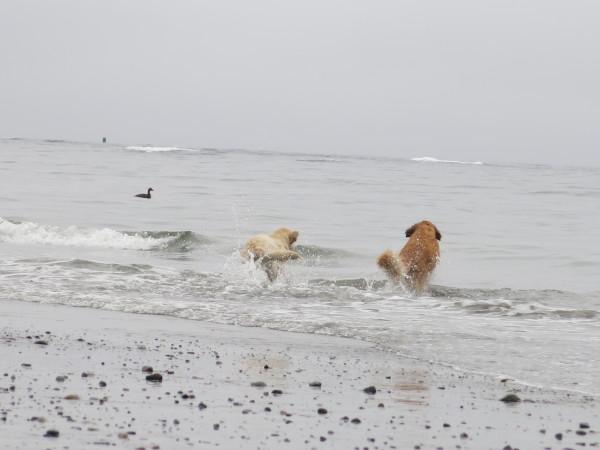 Dog Friendly Foss Beach Rye Nh