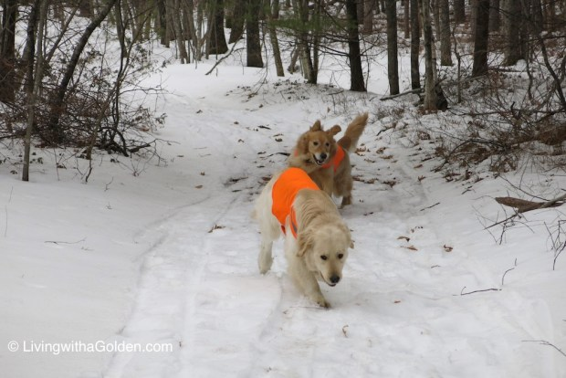 LWAG Dog Friendly Winter Hiking Alewive Woods