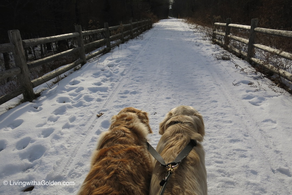 Does Dog Can Resist Winter