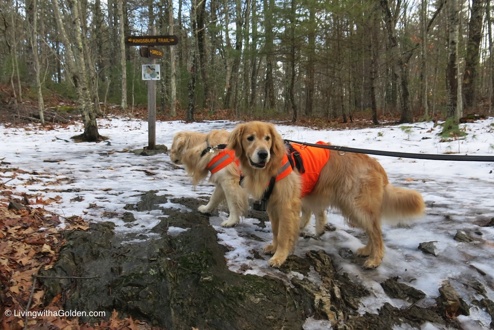 Maine Winter Hikes for Dogs
