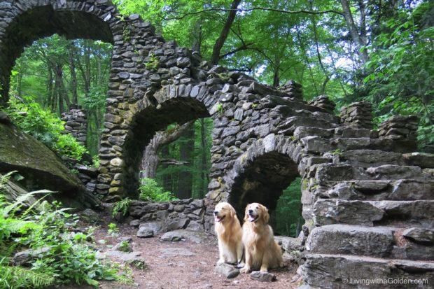 New England Dog Hikes