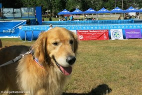 Seacoast Dog Daze 4