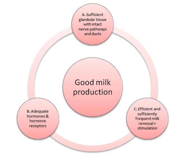 how-milk-is-produced-in-breast