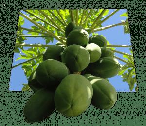 papaya-675448_640