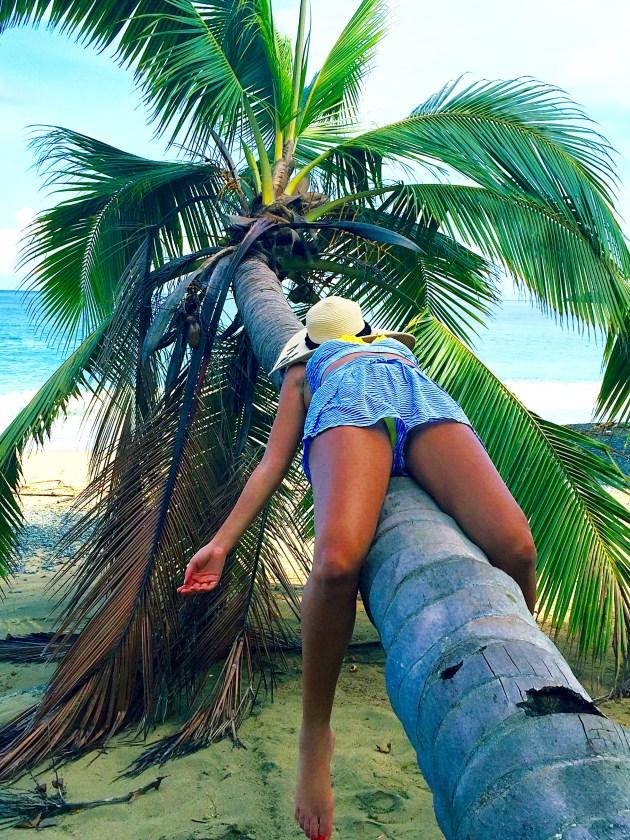 Tara on a coconut tree in tobago