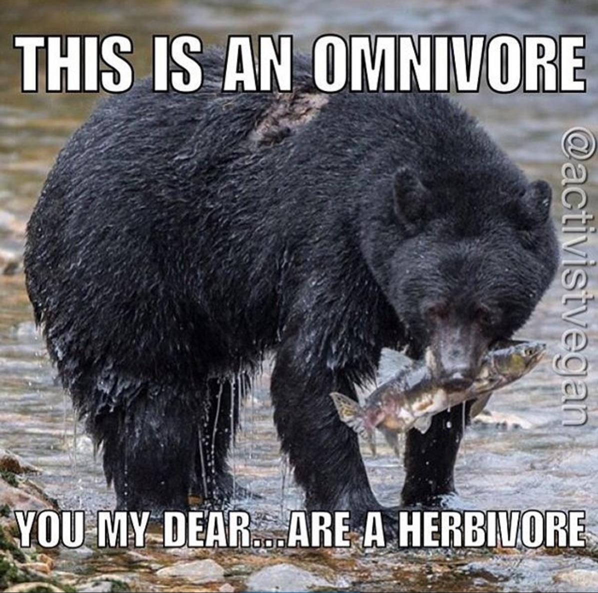 Omnivore Or Herbivore
