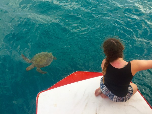 Tongarra Whitsunday Turtle